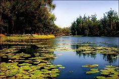 #Kodaikanal #Lakes - Interesting places to see in Kodaikanal