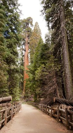 Visit the highlights of Sequoia National Park & Kings Canyon in two days with this handy itinerary featuring a good mix of driving, hiking, & sight-seeing.