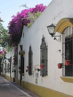 BUENOS AIRES, ARGENTINA (barrio de Belgrano)