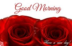 Good morning greetings ! Say good morning with these beautiful roses flower to your near and dear one.