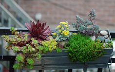 Simple Balcony Ideas - For The Garden - Garden Garden apartment garden arrangement garden equipment garden fence Garden ideas Garden small Balcony Flowers, Balcony Plants, Balcony Garden, Balcony Ideas, Balcony Grill, Succulents In Containers, Succulents Garden, Succulent Boxes, Plant Design