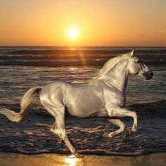 galloping in the wild at sunset - by cowboy
