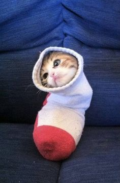 Sockitten. http://ift.tt/2jLhy5T
