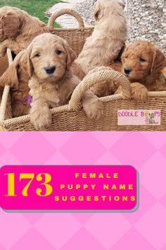 Are you getting a new puppy? Congratulations! Naming your new puppy can be a difficult task. There are a lot of great choices here for you!