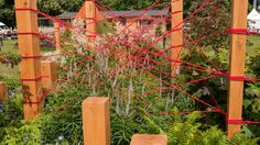 See The Red Thread Garden at RHS Hampton Court Palace Flower Show / RHS… Hampton Court Flower Show, Rhs Hampton Court, Dogs Trust, Dog Life, Palace, Outdoor Structures, Gardening, Flowers, Plants