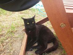 Kamil the cat.