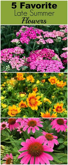 Bring color to your garden with these late summer flowers. Let's face it, by… Sponsored Sponsored Bring color to your garden with these late summer flowers. Let's face it, by mid-July a lot of your annuals have gotten all leggy… Continue Reading → Late Summer Flowers, Fall Flowers, Beautiful Flowers, Summer Blooming Flowers, Colorful Flowers, Wedding Flowers, Growing Flowers, Planting Flowers, Flowers Garden