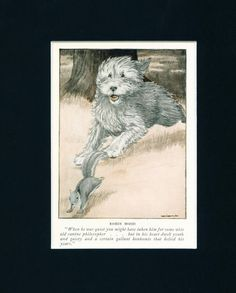 Dog Print 1926 Old English Sheepdog Squirrel by Charles Livingston Bull ANTIQUE  ;)  Our OES is a great squirrel dog
