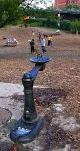 water fountain human dog - Google Search Dog Runs, Fountain, Fire, Google Search, Water, Outdoor Decor, Dogs, Design, Gripe Water