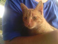 #cat :)
