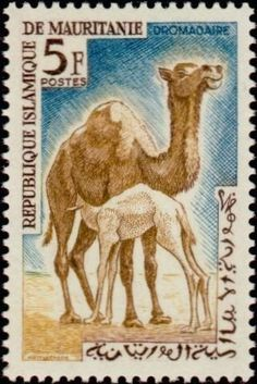 1963: Dromedary (Camelus dromedarius) (מאוריטניה) (Native fauna) Mi:MR 208,Yt:MR 169