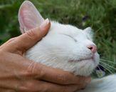 Cat Massage: The Best Way To Pet Your Cat #cats #cat massage