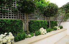 Tree Borders, Garden Borders, Backyard Garden Design, Garden Landscaping, Bay Tree Front Door, Back Gardens, Outdoor Gardens, Border Plants, Topiary Trees