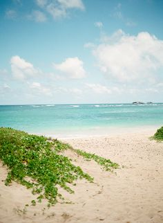 Blue Skies and Sandy Beaches of Oahu   photography by http://lauranelsonphotography.com/