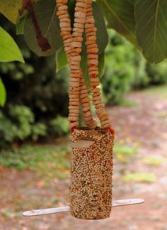 Bird feeder: Another toilet paper feeder idea with cheerios strung through pipe cleaners and popsicle stick perches . String will work fine too.