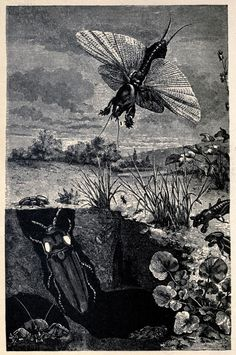 """""""Luminous Beetle (In burrow of Mole Cricket)"""" from Living Lights: A Popular Account of Phosphorescent Animals and Vegetables by Charles Frederick Holder (1887)"""