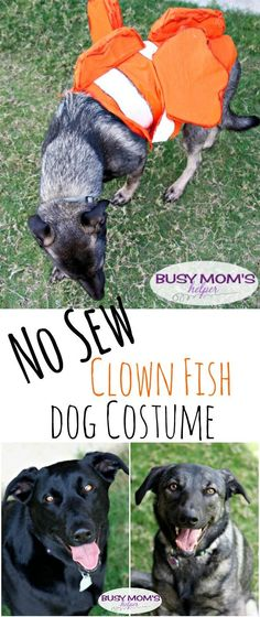 No Sew Clown Fish Dog Costume & How to Turn Your Dog Into a Fish for Halloween | Pinterest | Fish ...