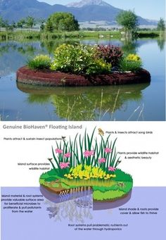 Cleaning Wastewater with Floating Island Technology. Take a floater planter made from post consumer plastic add soil & plants and time = clean water.