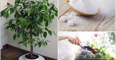 Kvetinárka nám poradila super trik! 1 čajovú lyžičku cukru nasypte pred polievaním do pôdy a výsledok bude stáť za to!   Báječné Ženy Indoor Plants, Orchids, Ale, Herbs, Gardening, Health, Plants Indoor, Colors, Plant