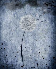 #löwenzahn #regen #wolke #vögel