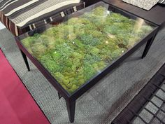 Table Adds a Micro-Landscape to Your Living Room. It's like terrarium furniture. Maybe a deck glass top table to serve as greenhouse or dehydrator?It's like terrarium furniture. Maybe a deck glass top table to serve as greenhouse or dehydrator? Terrarium Table, Moss Terrarium, Plastic Terrarium, Water Terrarium, Large Terrarium, Fairy Terrarium, Air Plants, Indoor Plants, Cactus Plants