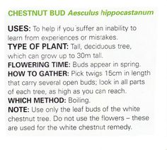 Chestnut bud uses and method Healing Herbs, Medicinal Herbs, Holistic Healing, Ayurveda, Natural Cures, Natural Health, Herbal Remedies, Home Remedies, Chestnut Bud