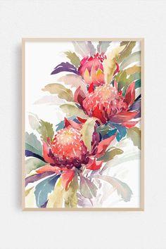Watercolor Illustration, Watercolor Print, Watercolor Paintings, Waratah Flower, Flower Art, Folk Art Flowers, Unique Meaning, Watercolour Flowers, Watercolor Pictures