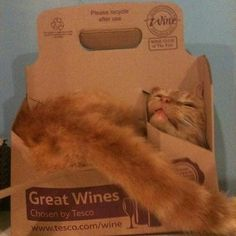 funny, funny pictures, funny photos, hilarious, funny cats, cat, IT'S CATURDAY! 15 Awesomely Entertaining Cat Photos