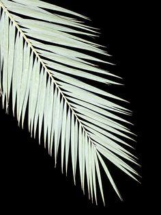 Tropic greens: The taste of Petrol and Porcelain | Interior design,  Vintage Sets and Unique Pieces www.petrolandporcelain.comTombouctou 52 jours – Lonneke van der Palen