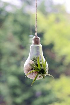 Air Plant Terrarium -- in a Light Bulb Shaped Hanging Glass Vase Planter £14.99