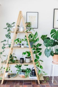Indoor Plant Decor ideas are fun for people of all ages. You don't have to have a huge garden or your Indoor Plant Decor Ideas are perfect for small garden arrangements. There are many different plants that are suitable for… Continue Reading → Home Garden Design, Home And Garden, Plantas Indoor, House Plants Decor, Indoor House Plants, Indoor Plant Shelves, Garden Shelves, Window Shelf For Plants, Shelves For Plants