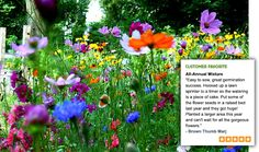 So love this - a bucket of wildflower seeds makes a fantastic low watering alternative to grass!