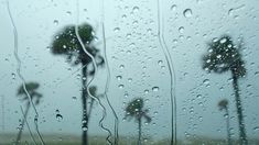 Palm Trees in Rain Storm Tropical palm trees in the rain during hurricane season on the Florida Coast. Rainy Wallpaper, Scenery Wallpaper, Nature Wallpaper, Green Background Video, Love Background Images, Aesthetic Photography Nature, Forest Photography, Video Photography, Beautiful Nature Pictures