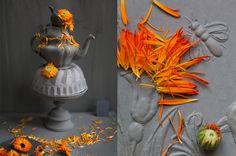 Dandelion by Dietind Wolf