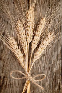 Wheat ears by windu on Creative Market