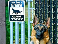 I have the dog. Now I need that sign ;-)