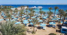 Le Pacha Resort, Egypt - Hurghada Varadero, Egypt, Table Decorations, Plants, Home Decor, Italia, Homemade Home Decor, Plant, Interior Design