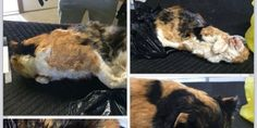 Imagine your precious kitty was trapped by a neighbor and turned in to animal control as a stray. At any... (738 signatures on petition)