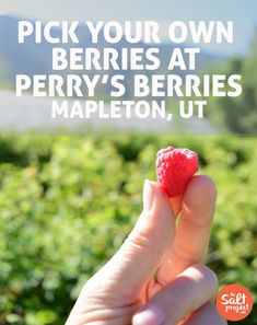 Perry's Berries   Grubbin'   Adventurin'   The Salt Project   Things to do in Utah with kids