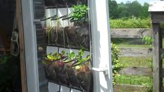 DIY Shoe Organizer Garden Perfect For Growing Vegetables And Fruits In Your RV. Great way for kids to learn about how plants grow while on the road too ;)  #gardens #rvgardens #roadschooling