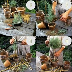 How to Make a Rosemary Topiary collage - Modern Design Topiary Plants, Topiary Garden, Topiary Trees, Garden Trees, Trees To Plant, Rosemary Plant, Small Yard Landscaping, Landscaping Plants, Gardens
