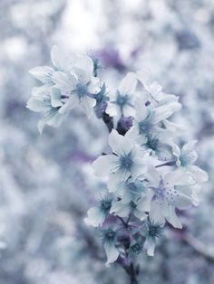 Pastel Blue Home Decor Photography Photo Vintage by DovieMoon, $20.00