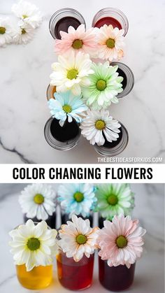 Color Changing Flowers Experiment - a fun science experiment for kids! Easy Crafts For Kids, Toddler Crafts, Preschool Crafts, Art For Kids, Kid Crafts, Indoor Activities For Kids, Science For Kids, Crayon Template, Purple Food Coloring