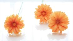 [Crepe paper flowers] Gerbera Daisy [Easy & Simple FULL tutorial] FREE T...