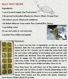 Russian Tortoise Diet Guide / Helpful Tips And Tricks Turtle Care, Pet Turtle, Jello Shot Recipes, Jello Shots, Russian Tortoise Care, Turtle Diet, Aquatic Turtles, Red Eared Slider, Turtle Painting