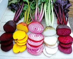 Rainbow Beet Collection, five fancy heirlooms, 300 mixed seeds, saute, salads, juice, fall garden, cool weather crop, easy to grow, non GMO by SmartSeeds on Etsy https://www.etsy.com/listing/207700519/rainbow-beet-collection-five-fancy