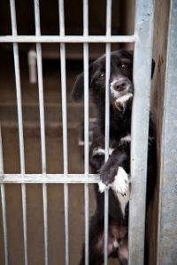 Story: Shelter Statistics, The Cold Hard Facts. (I'm pretty sure this is the dog that my friend adopted, so even though this picture is sad, this little guy has a happy ending.)