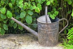 An old galvanized watering can sitting in the garden. Stock Photo