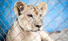 These Two States Are Working To End Wild Animal Performances | Care2 Causes