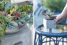 Outdoor_Patio_Succulents1